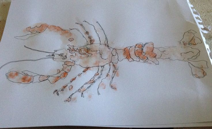 Quick lobster sketch