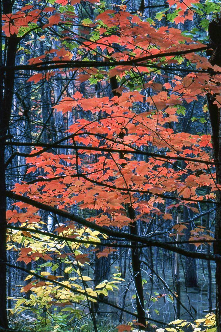 Fall - Ontario, Canada - About 1985 | Ontario | Canada | FotoDiSpalle
