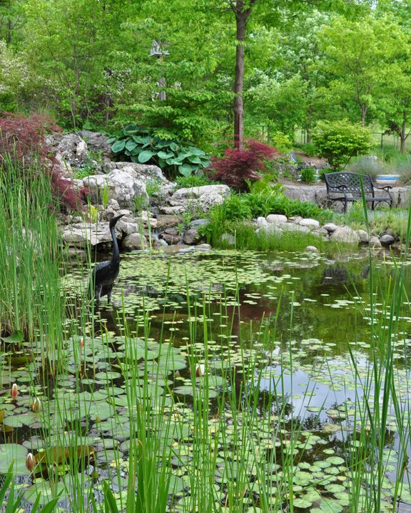 13 best images about ponds on pinterest gardens always for Backyard pond animals