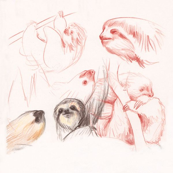 "Sloths sketches, making of ""Ciacio in Amazonia"" picture book by Sarah Khoury"