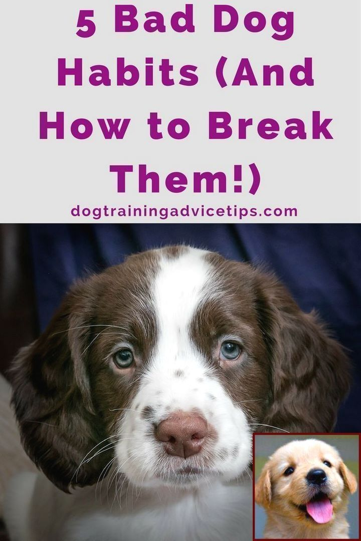 House Training A Puppy With An Older Dog And Dog Training Courses