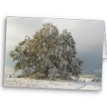 Beautiful winter scene of snow on a big low oak tree with a little path to a bench.
