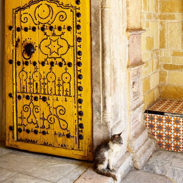 This lovely cat  loves yellow!  Le Chateau de la Medina Tunis Tunisie.