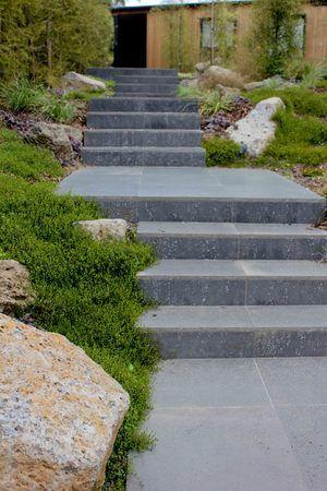 Steps with Muelenbekia, Mount eden NZ Designer: Xanthe White