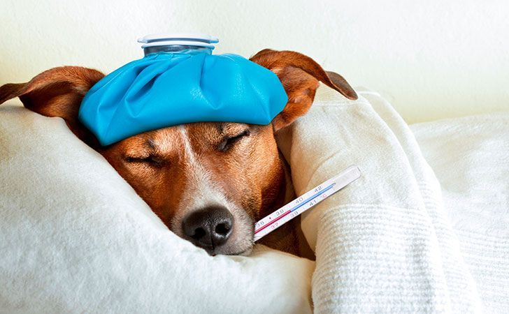 #pets #news #dogs An outbreak of canine flu is spreading across several states, leaving many furry family members to face a ruff couple of sick days. Heres what you can do to help your pooch