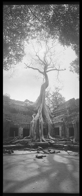 KHMER EMPIRE.  Ta Prohm, temple at Angkor in Cambodia, 1186 CE.  //  During centuries of neglect following the collapse of the Khmer Empire the jungle partly reclaimed the site.