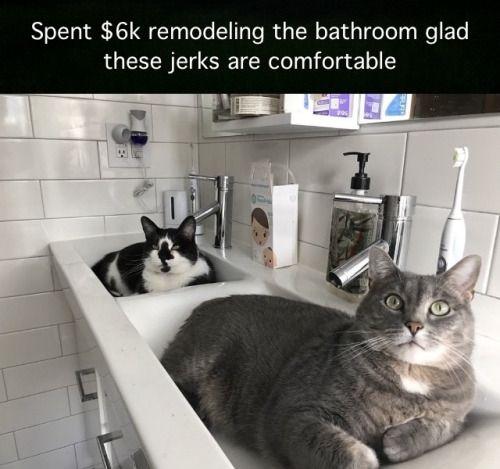 Dat Persian Cat Meme