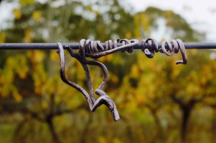 Knarly knots in the vineyard - thx harvey for this photo!