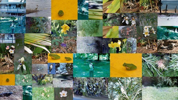 coochie flora fauna