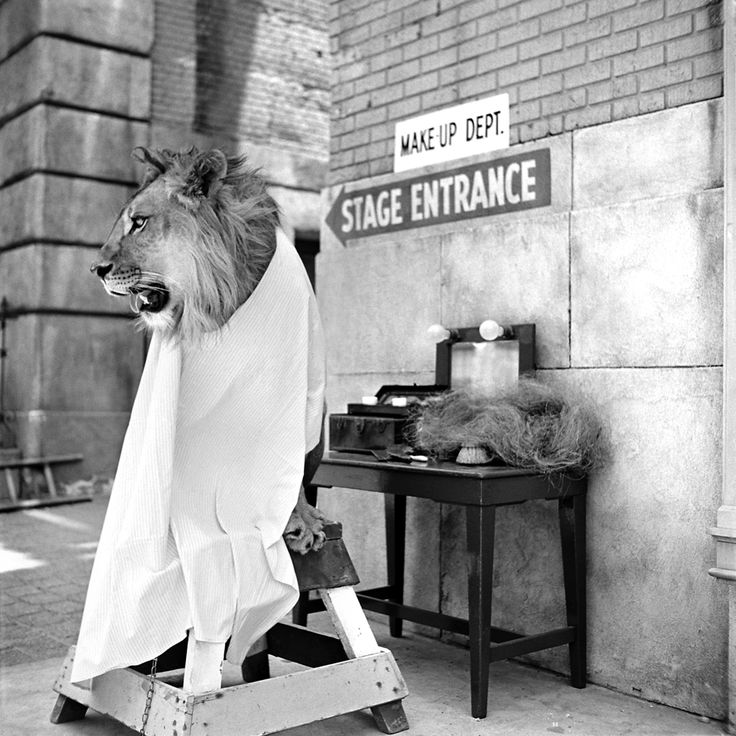 Amazing Photos of Fearless Fagan in 1951 – The Incredible Lion Who Became a Hollywood Star