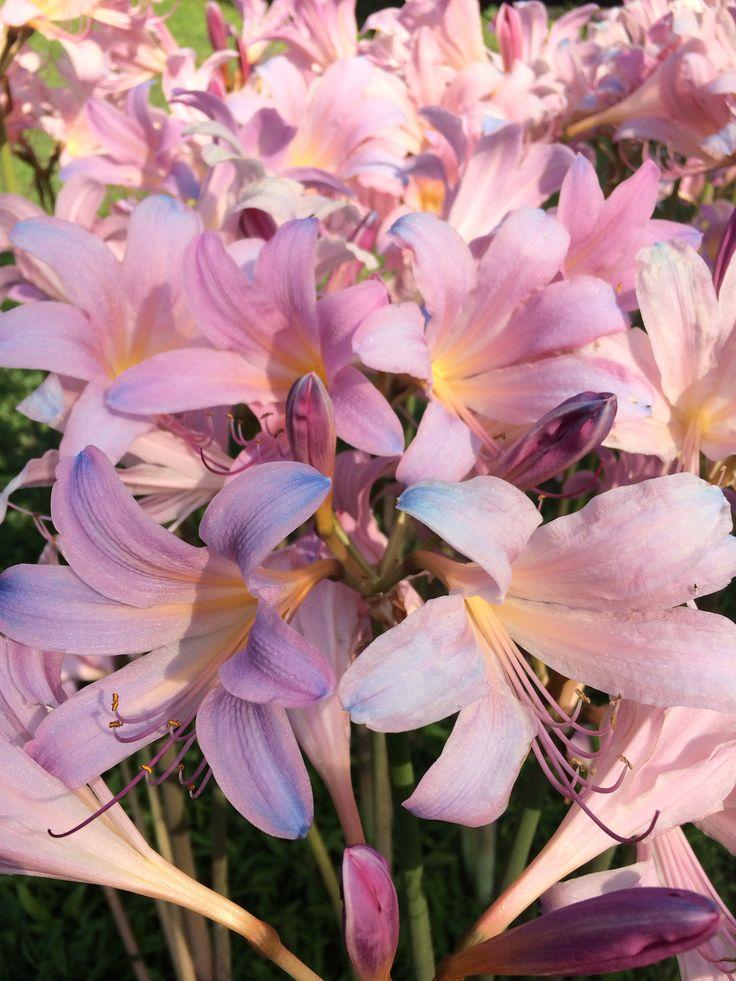 Tennessee summer flower!!!