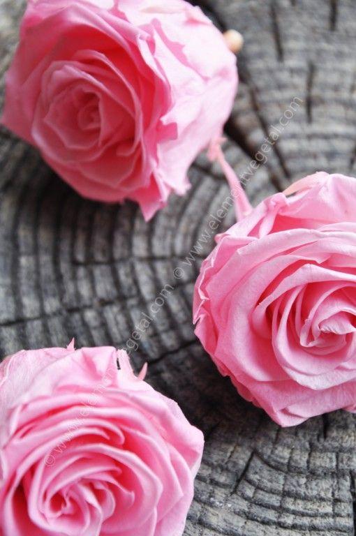 Roses stabilisées Origine équateur Coloris rose pastel