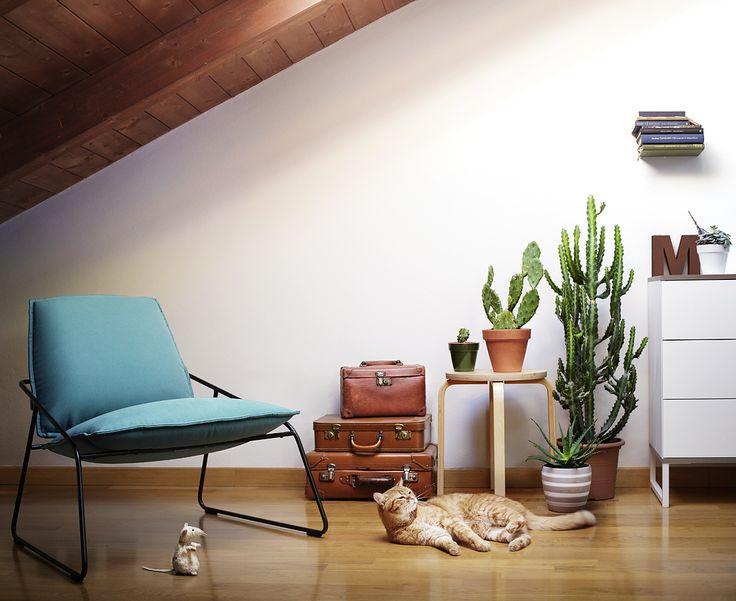 cat interior mouse cactus ikea