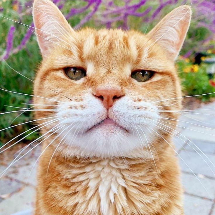 Gambar Kucing Aesthetic godean.web.id