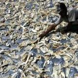 Petite victoire, mais victoire tout de même pour les défenseurs de la cause animale. La Chine vient en effet de bannir la soupe aux ailerons de requin de ses menus pour les banquets d'état.