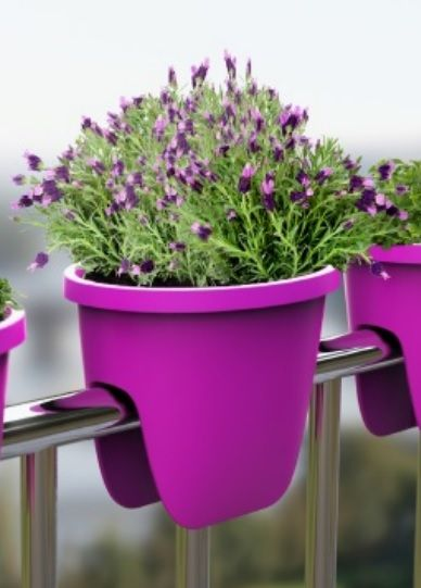 Balconia OVI - match the flower color with your flower pot.