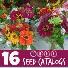 16 Free Seed Catalogs for 2015 from www.Happy2BaHomemaker.com