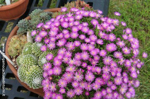 compo grasse500 Fioriere invernali: composizioni di piante grasse da mettere sul balcone