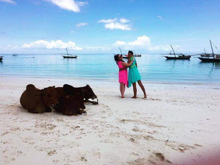 Lovely beach cows & flashy KUKLAs on Zanzibar island  #zanzibar #travel #tanzania #africa