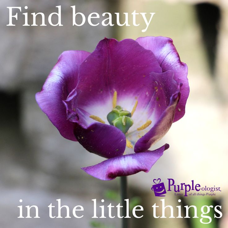 Purple Quotes: 17 Best Images About Purple Quotes On Pinterest