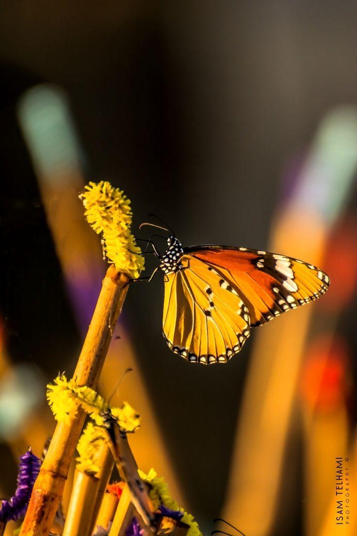 best butterfly garden images on pinterest butterflies garden