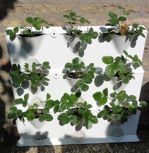 verticaal tuinieren met aardbeien | Tuin | Pinterest