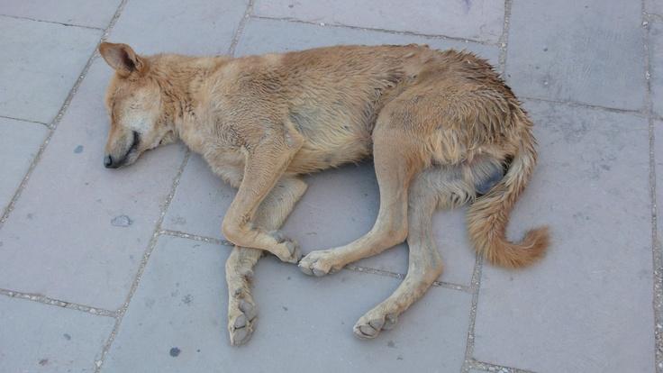 not so cute egyptian dog