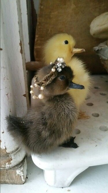 adorable ducklings.