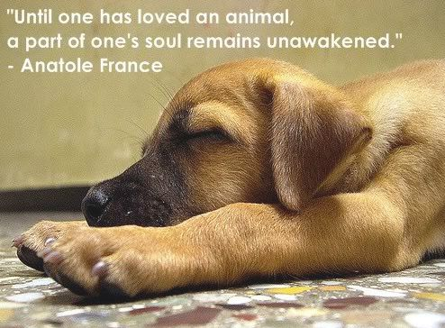 Quotes About Dogs 57 Best Dog Quotes Images On Pinterest  Dog Quotes Doggies And Dog .