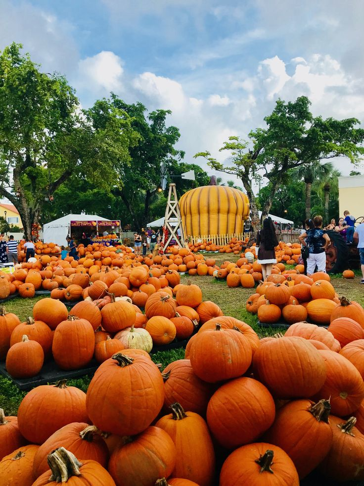 Picture  Pumpkin Patch Miami Lakes  By Elizabeth Stainberg