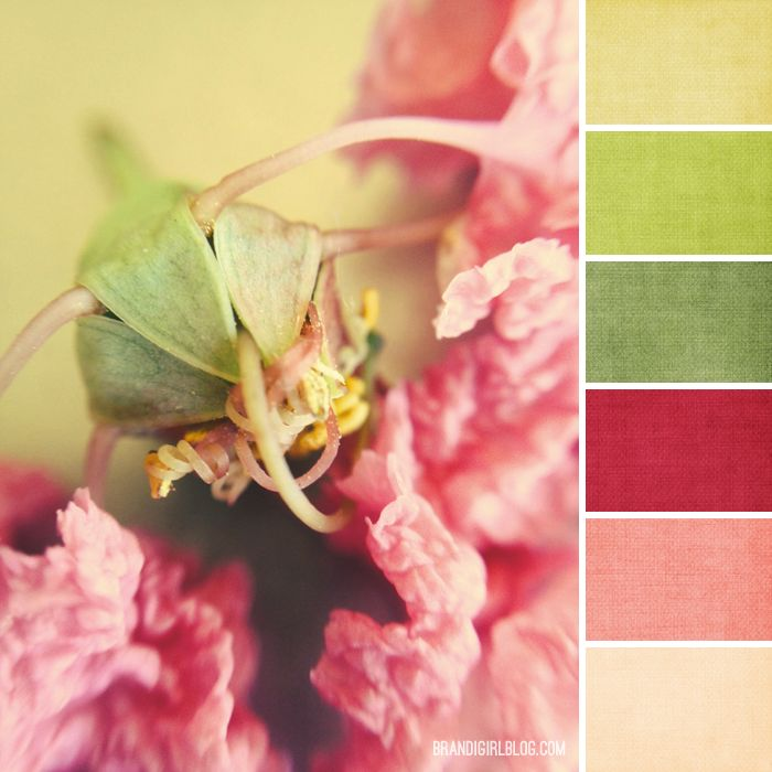 Color Palette #171 :: Crepe Myrtle
