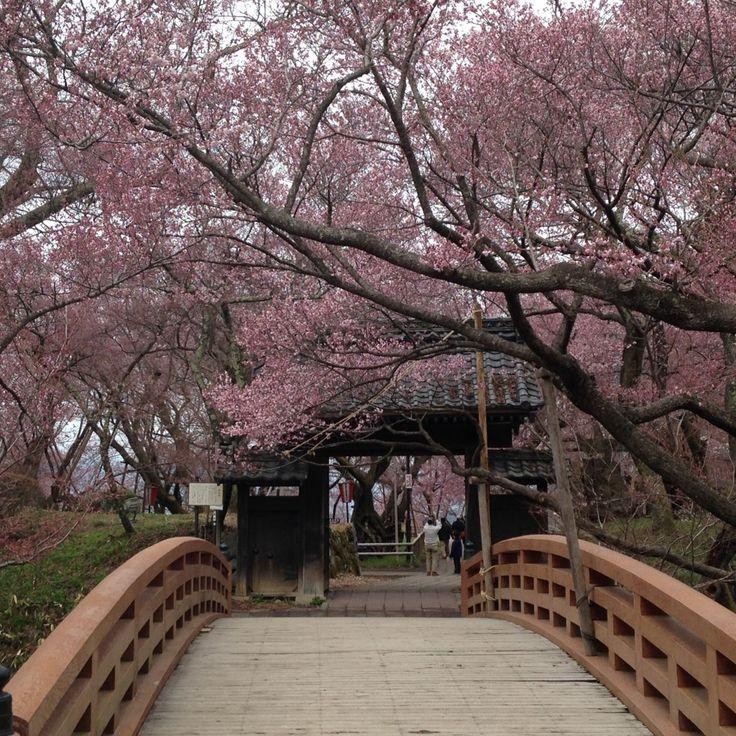 *****桜雲橋 » 平成28年度(2016)高遠城址公園さくら祭り