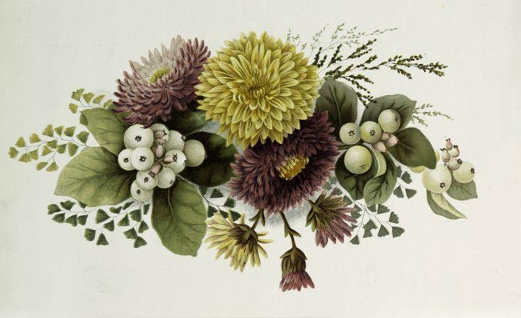 Vintage Chrysanthemum Floral Spray Graphic