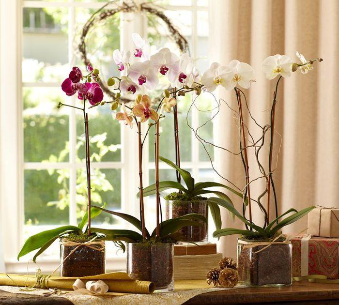 9 правил ухода за орхидеей