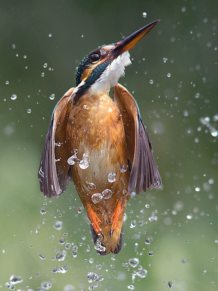 Missile - Yet another from my kingfisher series