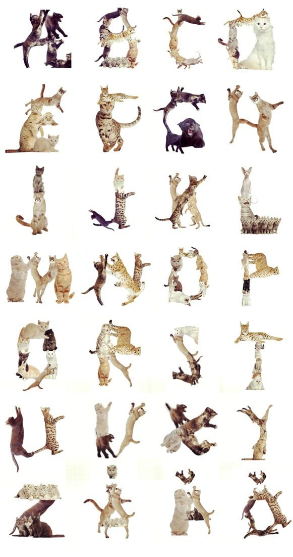 Cat Alphabets by Martin Löfqvist