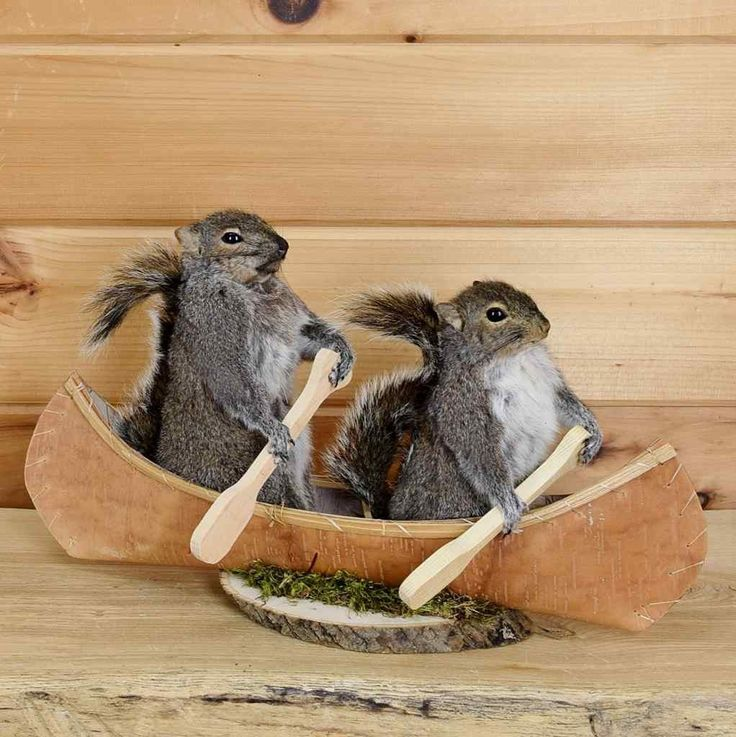 Taxidermy for Sale - Two Squirrels Paddling Canoe Taxidermy Mount SW3683. Safariworks Taxidermy Sales has novelty gifts, such as squirrel, chipmunk, raccoon, opossum, otter.