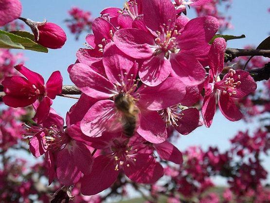 Tavaszi virágpor gyűjtés