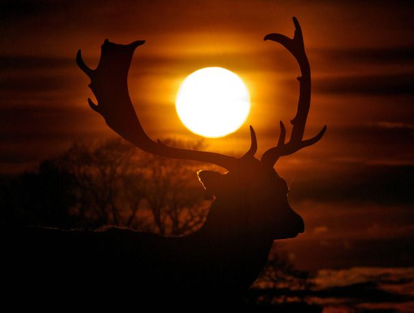 Dublin-based photographer Marc O'Sullivan brightened up our day with wonderful images of deer in Dublin's Phoenix Park.