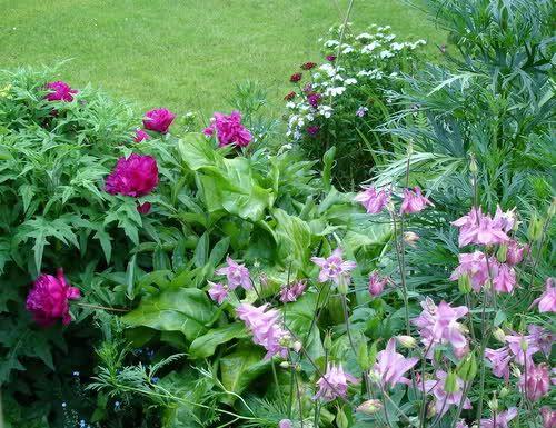 61 best Stauden  Sträucher images on Pinterest Farmhouse garden - schoner garten mit wenig geld