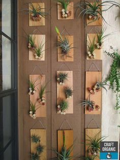 Tillandsia displayed on individual plaques featuring a bunch of corks! #tillandsia #airplants #corks: