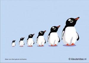 Pinguïns meten met kleuters, hoek voor 'poolonderzoekers', kleuteridee.nl , thema Noordpool & Zuidpool, free printable.