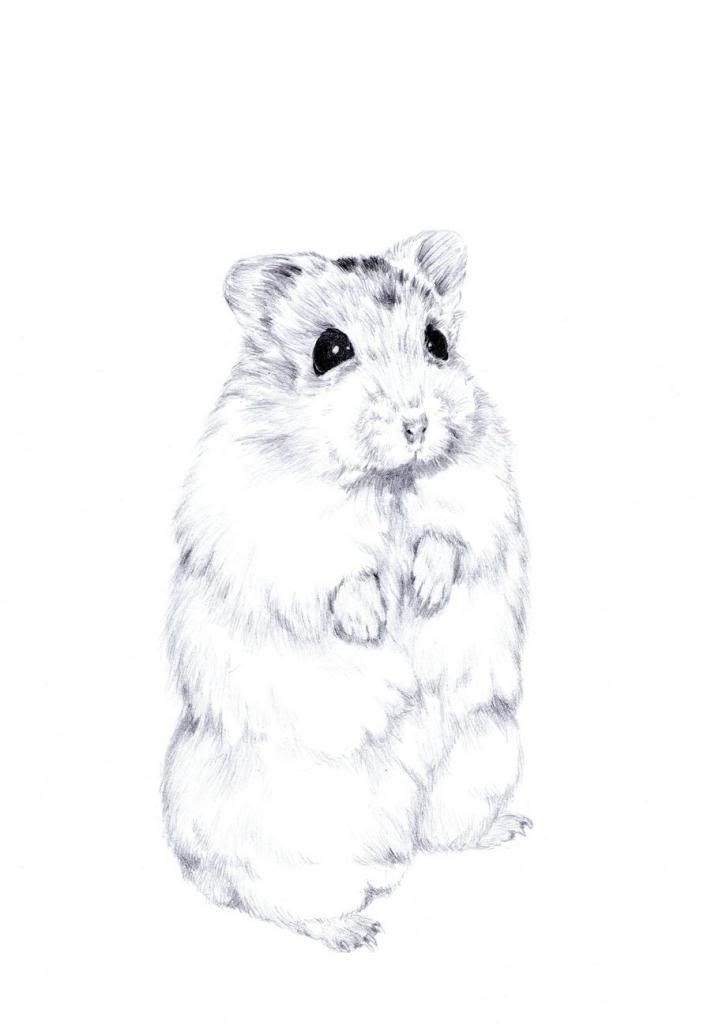 Hamster Drawing Google Search Animal Sketches Animal