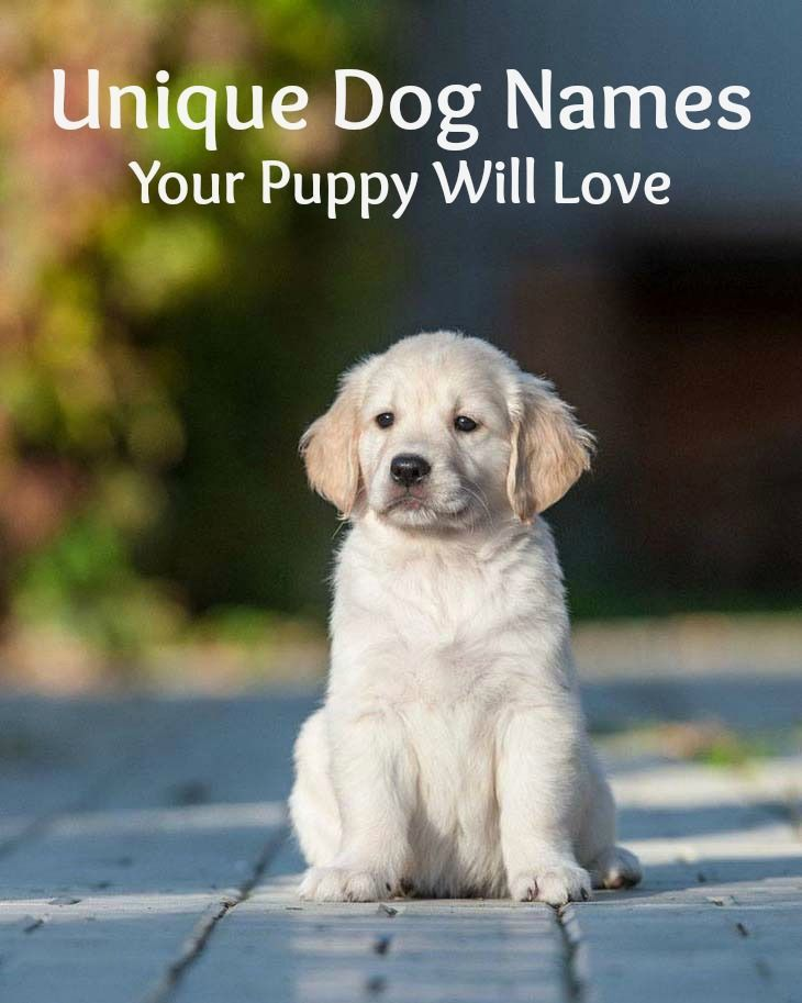 Unique Dog Names Unusual Puppy Names For Your Boy Golden
