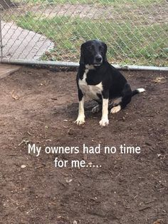 "3/23/17 A dog who is described as ""one of the best dogs"" at the shelter is homeless because his former family gave him up, citing ""no time"" as the reason for their betrayal. Roscoe, (CC#16-7341) had a home for most of his life, but everything was turned upside down in his world when his family gave him …"