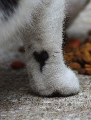 kitty paw heart: Kitty Tattoo, Cat Paw, Feral Cat, Fur Heart, Ankle Tattoo, Heart Tattoo, Valentines Day, A Tattoo, Happy Heart