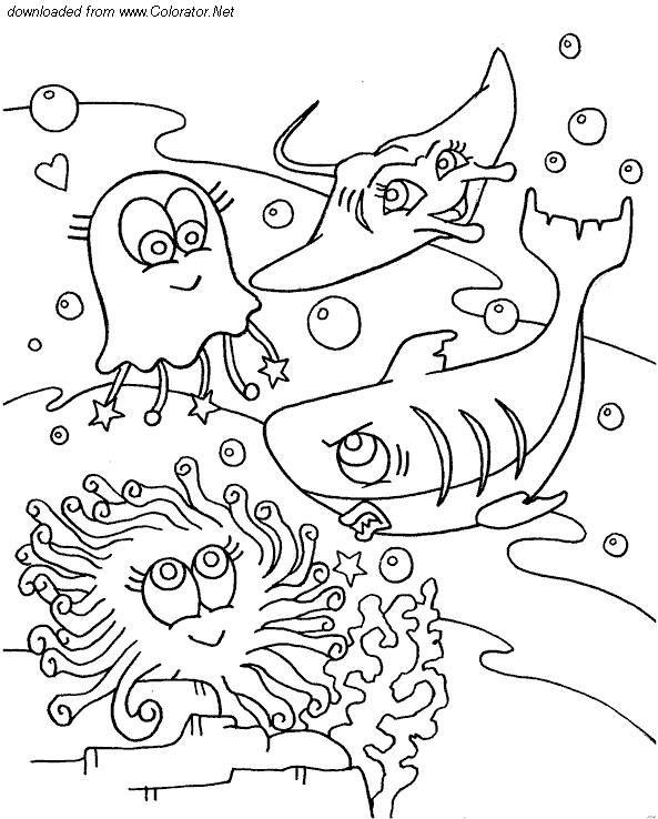 Mejores 164 imágenes de animaux aquatique en Pinterest   Agotamiento ...