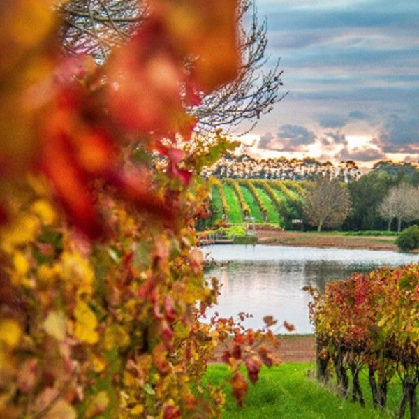 Gallery | Laurance Wines Margaret river
