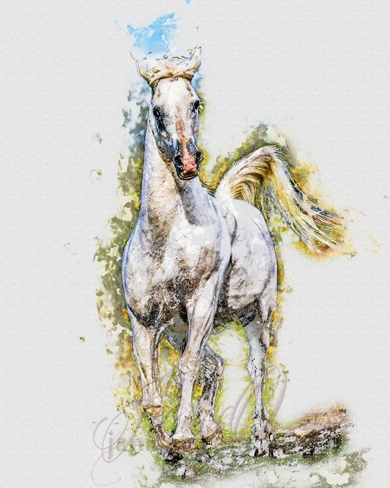 The Silver Stallion - My White Horse...He stands, head high, gazing into the distance, nostrils flaring to catch the scents on the breeze, ears pricked, tail curled over his...