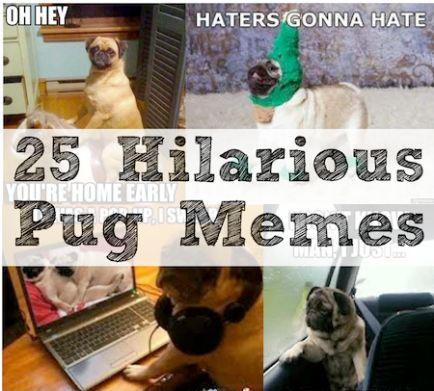 25 Hilarious Pug Memes- so stupid and so hilarious all at the same time!